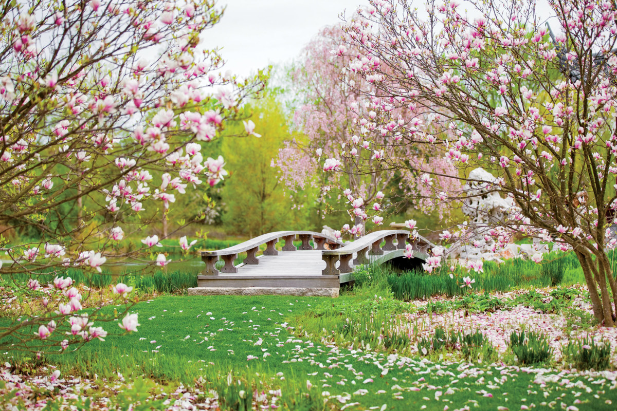 magnolia trees near bridge